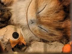 Sleeping Loth Cat