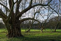 2892 Château et parc de Chamarande