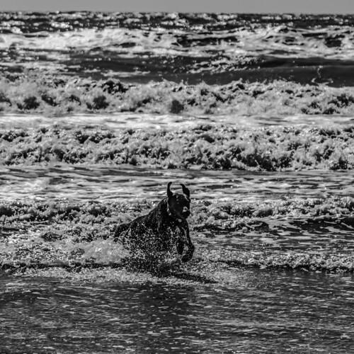El perro del mar