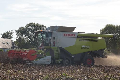 Claas Lexion 670 Terra Trac Combine Harvester cutting Spring Beans