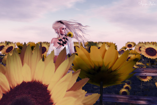 ❤ Sunflower