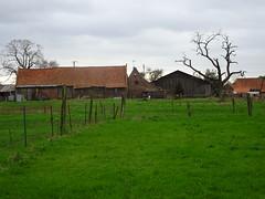Templeuve-en-Pévèle (Bonnance)