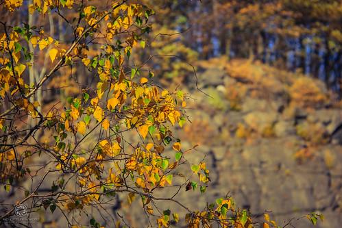 Herbstspaziergang #3 (den Kletterfelsen im Blick)