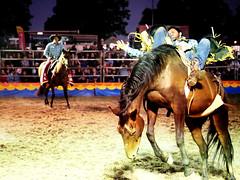 Wrangler Rodeo