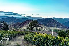 Vino y Cordillera