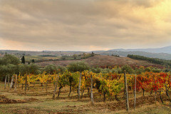 Chianti Vineyard Autumn