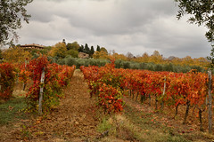 Chianti Red Tuscany