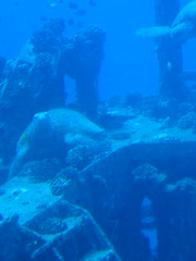 Turtle on the shipwreck - seen from a submarine