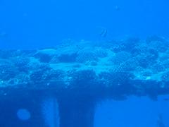 Moorish Idol on Shipwreck, submarine tour