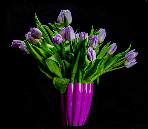 Tulips in a vase - 6M7A8885