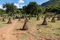 Tree Guards, Karamoja