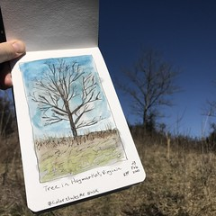 Tree in Haymarket, Virginia