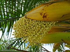 Spewing Seeds