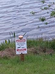 Danger Alligators