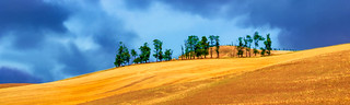 The Palouse © Click to view large