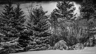 Trees 'n rocks