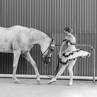 EN_CM_horse 25
