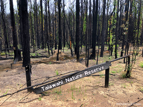 Talawahl Nature Reserve after the Hillville Bushfire, Coates Road, Mid North Coast, NSW