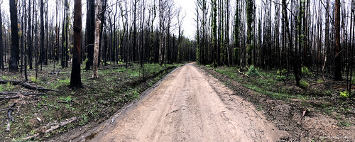 The Black Forest - Talawahl Nature Reserve after the Hillville Bushfire, Coates Road, Mid North Coast, NSW