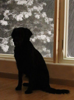 8/52 - Watching the snow fall