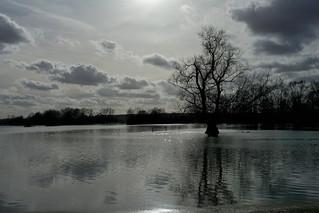 A contre-jour , les inondations à Han-sur-Meuse .