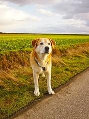 Hund am Wegesrand | 4. Februar 2016 | Fehmarn - Schleswig-Holstein - Deutschland