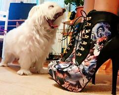 Tobi dissaproving my platform high heels