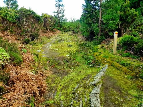 Old Oxcart Trail to the Collapsed Five Peak Volcano &  Caldeira de Guilherm Moniz /  Passagem das Bestas / PRC07TER / TERCEIRA / AZORES / circular / Hike 4 - Series 6 2020  / 5 star hike, relatively easy.   Geosite & protected area of Caldeira de Guilherm