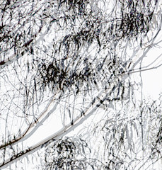 Branches 2