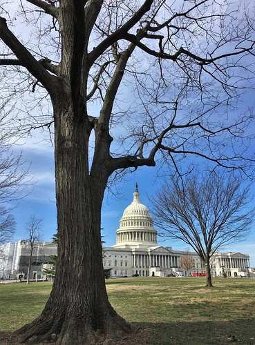 Washington DC ~ framing the Capitol