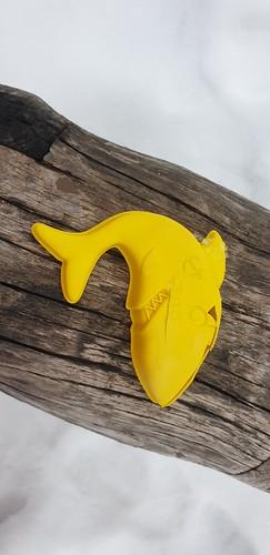 Ein Hai wird freigelegt