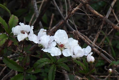 2020-02-19_N0453_berry-flowers