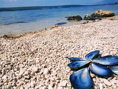 Sunbathing mussels