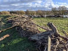 River Tweed walk at Coldstream, Feb 2020