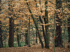 2020.02-04_Atlanta-area parks