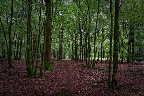 Forêt de Saint Michel - Aisne