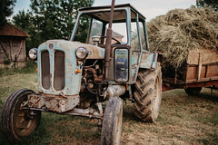 Old Rakovica tractor in the field.