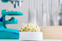 Onion microgreen on a blurry laboratory background with microscope and test tubes