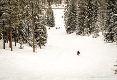 Canadian Ski Patrol - Palliser Zone