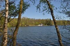Blick durch Bäume auf den Heider Bergsee in Brühl (136FJAKA_3479)