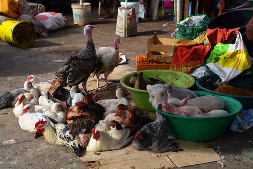 A vendre marché Cap vert _2894
