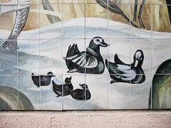 Die Enten. / 27.02.2020