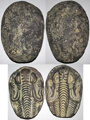 Fake trilobite-bearing concretion