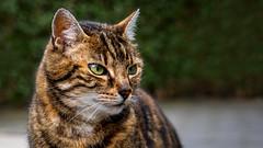 die Katze...