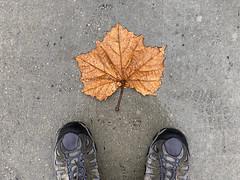 Rainy Sunday Walk
