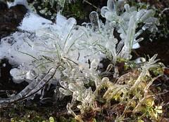 """""""Ice flowers"""""""