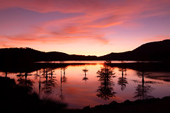 Twilight Trees of Ocoee Lake