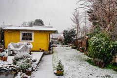 Unser Garten (Feb. 2020)