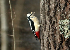 Tree and woodpecker