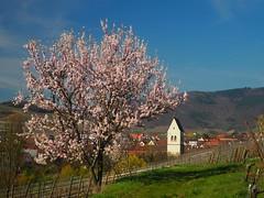 Mittelwihr (Alsace)